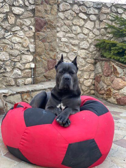 Кресло мяч для собак: фото 03